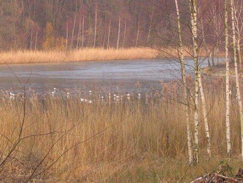 Un des étangs de la forêt de Bondy.