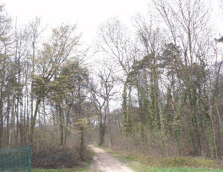 Forêt de Bondy.