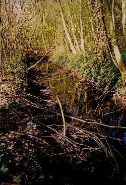 Le ruisseau bien caché sous les arbres