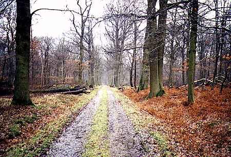 Bois St Martin : une chênaie ancienne magnifique