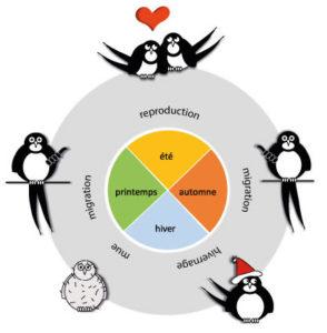 Cycle de migration des oiseaux (source : vigienature)