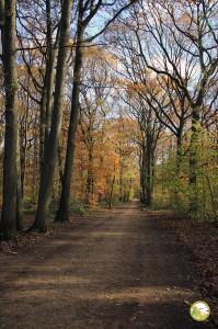 Foret de Bondy - Chemin forestier, novembre 2016 (P. Amiard)