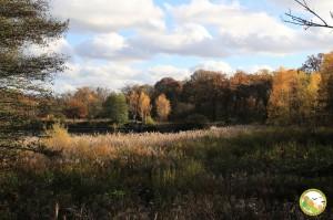 Foret de Bondy - Vue sur les étangs, novembre 2016 (P. Amiard)